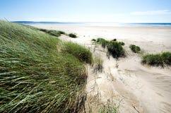 Sanddyn längs shorelinen Arkivfoton