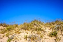 Sanddyn med dess vegetation som bevaras på Lanzada, Spanien royaltyfria bilder