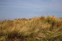 Sanddyn med sandrör på ett kust- läge royaltyfri foto