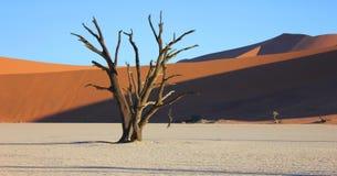Sanddyn och ett dött träd på Deadvlei Namibia royaltyfria foton
