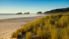 Sanddyn och gräs på en strand, kanonstrand, Oregon arkivfoto