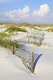 Sanddyn och havshavre på en ursprunglig Florida strand Arkivfoto