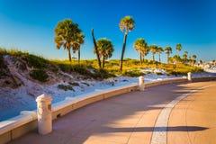 Sanddyn och palmträd längs en bana i Clearwater sätter på land, Flor Arkivfoton