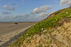 Sanddyn på en strand på golfen av Mexico Royaltyfri Foto