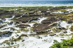 Sanddyn på havet Royaltyfria Foton