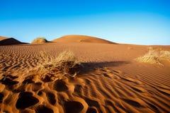 Sanddyn på Sossusvlei, Namibia Arkivbild
