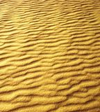 Sanddyn på stranden royaltyfri fotografi