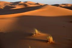 Sanddyner i den Sahara öknen Royaltyfri Foto