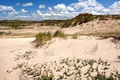 Sanddyner i Zandvoort aan Zee Arkivfoton