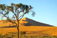 Den sydliga afrikanen landskap Royaltyfria Bilder