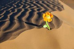 Sanden beskådar bakgrund med en blomma Arkivbild