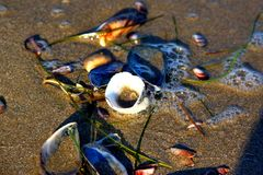 sanden shells vått Arkivfoton