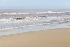 Sanderling на пляже Стоковые Изображения RF