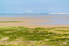 Sandflatlandschap van natuurreservaat dichtbij Maasvlakte en Rotterd stock fotografie