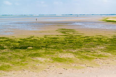 Sandflatlandschap van natuurreservaat dichtbij Maasvlakte en Rotterd stock afbeeldingen