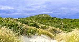Sandflystrand nära Dunedin, Nya Zeeland arkivfoton