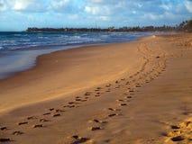 Sandfotspår royaltyfri fotografi