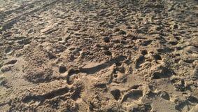 Sandfotsteg Fotografering för Bildbyråer