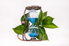 Sandglass With Leaves. Sandglass with green leaves on isolated background Royalty Free Stock Photo