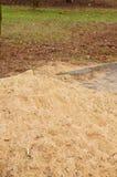 Sandhügel Stockbild