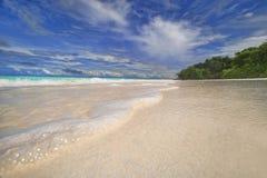 Sandhavsskum. Royaltyfri Foto