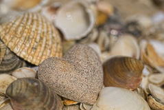 Sandheart and shells Royalty Free Stock Photography