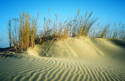 Sandhill with bents. Clear summer day stock photo