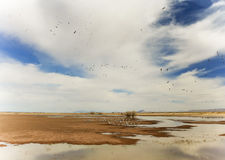 A Sandhill Crane Flock Flies Above Whitewater Draw Royalty Free Stock Photos