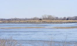 Sandhill Cranes on the Platte River in Spring Stock Image