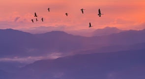 Sandhill Cranes Silhouetted in Sunrise Royalty Free Stock Image