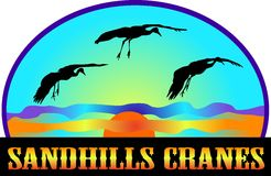 Sandhills Cranes. Migrate through the central United States every spring and fall. They were once nearly extinct. Today, they bring many tourists to admire Royalty Free Stock Images
