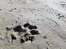 Sandhund Royaltyfri Fotografi