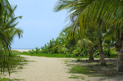 Sandig bana till och med kokosnötpalmträdskog till stranden Royaltyfri Bild