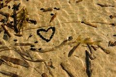 Sandig botten i grunt vatten Arkivbild