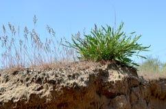 Sandig buske Royaltyfri Fotografi