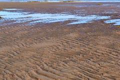 Sandig kust av det nordliga havet Royaltyfria Bilder