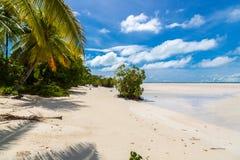 Sandig paradisstrand av den azura turkosblåa grunda lagun, norr Tarawa atoll, Kiribati, Gilbert Islands, Mikronesien, Oceanien royaltyfri fotografi