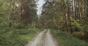 sandig skogv?g arkivfilmer