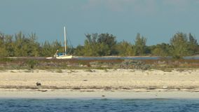 Sandig strand av Cayo Largo del Sur stock video