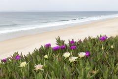 Sandig strand med blommor Arkivbild