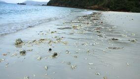 Sandig strand med många korall Arkivfoto