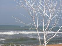 Sandig strand med palmträd och havet med vågor, strand, Sri Lanka royaltyfria foton