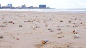 Sandig strand med rapan skal och ett trumpetsnäckaskal Hav och stad på bakgrund stock video