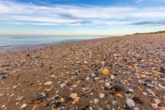 Sandig strand med skal arkivbild