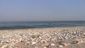 Sandig strand med snäckskalclkoseup Azov hav med små vågor i sommar lager videofilmer