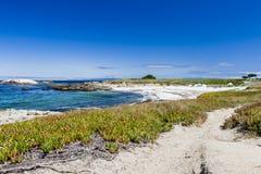 Sandig strand nära cypresspunkt Arkivbilder