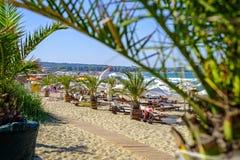 Sandig strand och palmträd i solig dag fotografering för bildbyråer