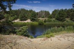 Sandig strand på banken av en skogflod mot bakgrunden av en barrskog och en blå himmel royaltyfria bilder
