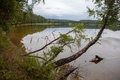 Sandig strand på en sjö i en skog Arkivbilder