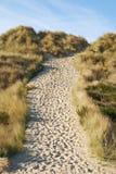 Sandig Trail Royaltyfria Foton